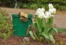 Vous êtes à la recherche d'un paysagiste qualifié pour votre jardin?
