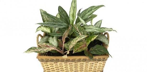 Un intérieur sain grâce aux plantes dépolluantes