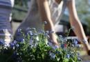 Que faire pour entamer des travaux de rénovation de son jardin ?