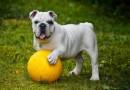 L'importance des chenils pour chiens