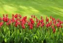 La Débroussailleuse thermique pour le jardinage